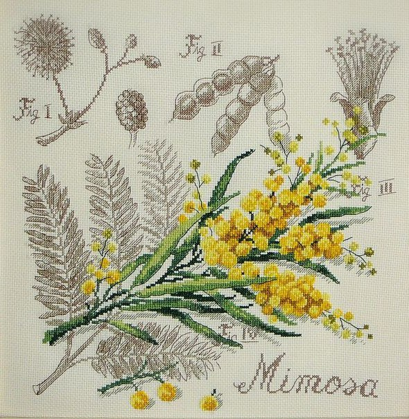 Мимоза вышивка схема